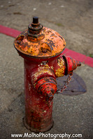 7 Fire Hydrants Humboldt County 2016 1YAK8989